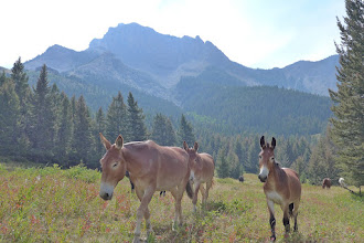 Photo: The mules wanted to hear all about our climb.