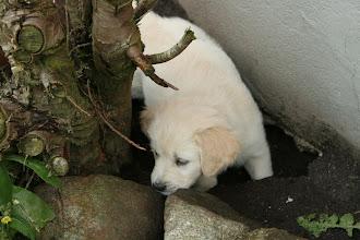 Photo: Jeg hjælper i haven, med at grave...