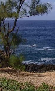 Beach and tree - náhled