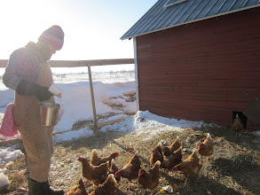 Photo: Checking out the chickens