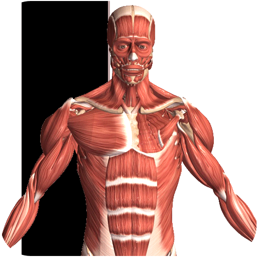 Visual Anatomy 2 APK Cracked Download