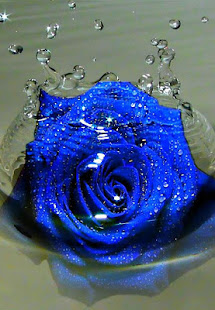 blue rose wallpaper apps on google play