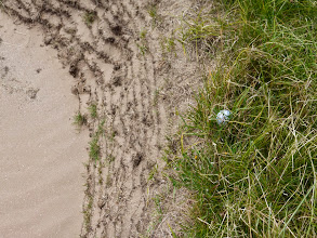 Photo: My ball on the edge of a six-foot deep bunker! (Lucky me as I managed an up-and-down!)