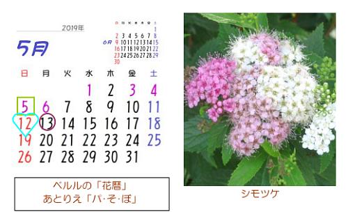 5月の花暦