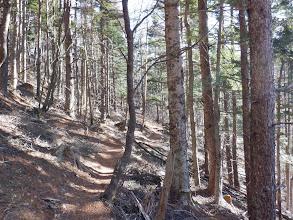 次第に樹林の中へ