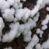 Coral Slime