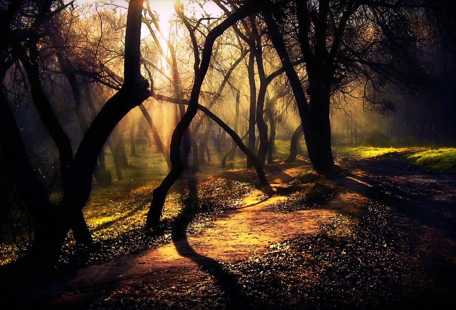by Alexandru Popovski - Landscapes Forests ( fall, color, colorful, nature )