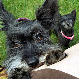 Lucy & Pixie by Deb Jardine - Animals - Dogs Portraits ( pets, dogs, canine, k9,  )