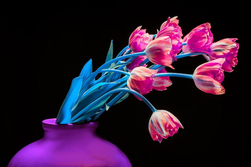 tulipani di Mauro Moroni