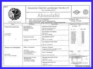 Photo: Papa - Lennox-Zolo vom Löwengarten - HD A1 - LPN1 frei N/N - LPN2 frei N/N