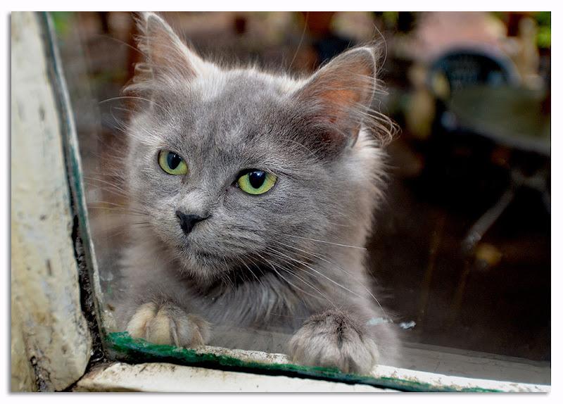 Gli occhi di un gatto di fabio vitale