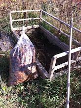 Photo: így. a giliszta humusz tetejére kerül a lomb, takarásnak.