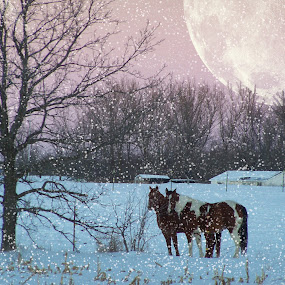 WINTER GREETINGS by Beth Krzes - Animals Horses ( winter, horses, stock horses, snow, pasture buddies,  )