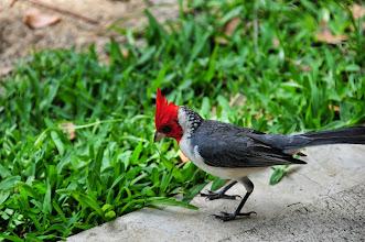 Photo: Pretty bird - a cardinal.