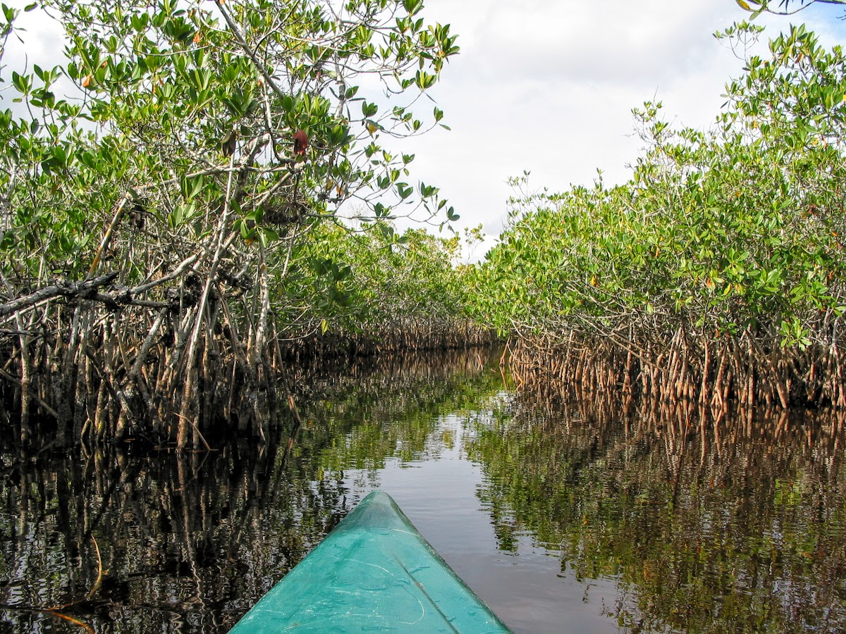 Kayaking through Hells' Bay Mangroves