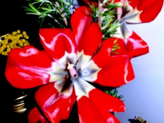 Tulipano esploso! di Polly89