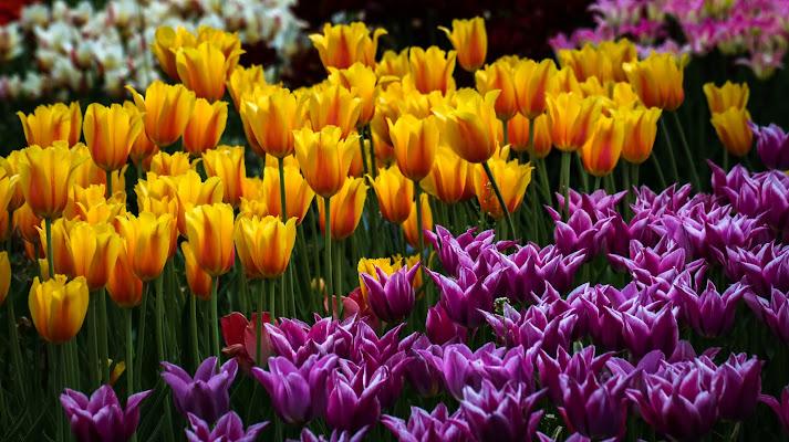 Primavera dintorno brilla nell'aria e per li campi esulta...