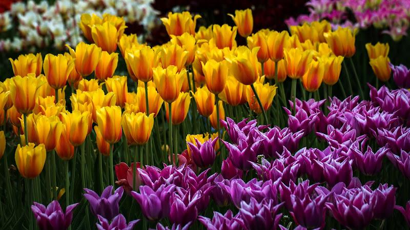 Primavera dintorno brilla nell'aria e per li campi esulta... di Nemesys61