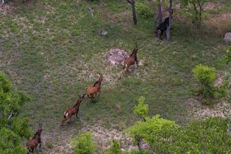 Photo: Gabriel and his four cows; O Gabriel e suas quatro fêmeas.