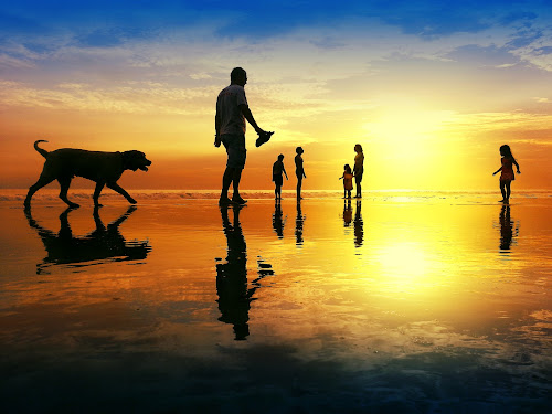 One Occassion in the Beach by Alit  Apriyana - Instagram & Mobile Android ( reflection, silhouette, sunset, sunrise, dog )