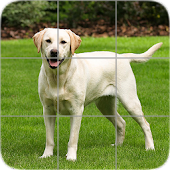 Dogs Puzzle:Labrador Retriever