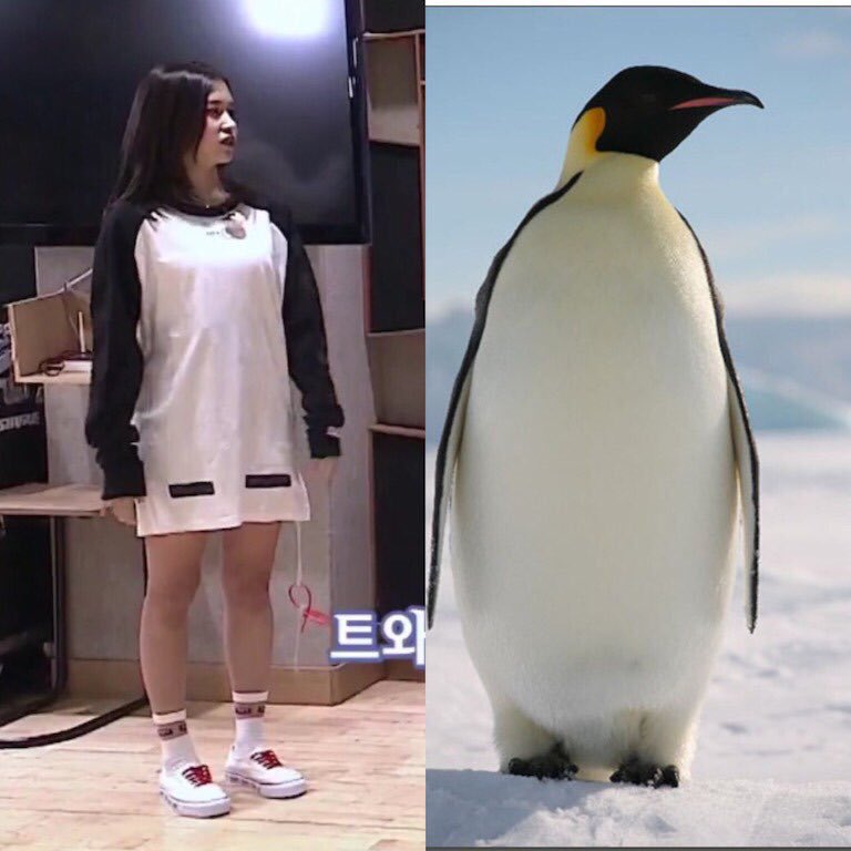 mina_penguin_1