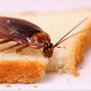 Сонник значение сна таракан