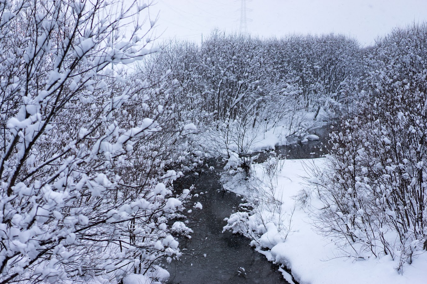 碧水橋からの川辺の風景