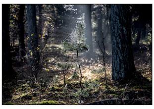 Photo: Natuur - bossen foto: Bert Morsink