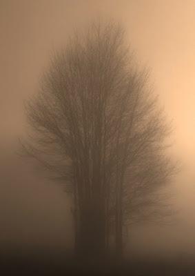 La prima nebbia di roberto.t