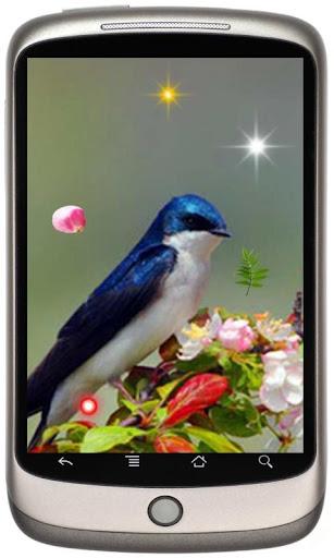 Amazing Hummingbirds Colibri