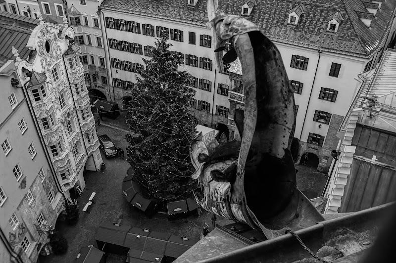 Il drago sull'albero di Oppio82