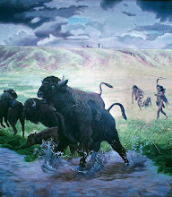 Photo: Buffalo Hunt Centered in what is now Utah, the area of the Colorado Plateau and eastern Great Basin was first settled (9,000 BC to about 5,500 BC) by Paleoindian - big and small game hunters, collectors, foragers. About 5,500 BC to about 1000 BC archaic indians adapted increasingly to agriculture. Originally considered to be an inferior, out-back branch of the well studied Anasazi culture, most archaeologists now believe that between 2500 and 1500 years ago, the existing groups of hunter-gatherers gradually developed into the Fremont Culture with a lifestyle of hunting/gathering and corn horticulture. They left a record of a distinctive pictographs and   petroglyphs, throughout  their range. The Three King's panel of the Fremont Indians near Vernal, Utah is regarded as the finest Indian petroglyph panel in the world.  http://www.thefurtrapper.com/fremont_indians.htm Artwork: Nola Davis, Texas Parks and Wildlife Department and the Lubbock Lake Landmark http://www.texasbeyondhistory.net/lubbock/murals.html