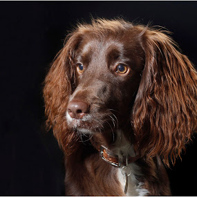 by Graham Sivills FBCS - Animals - Dogs Portraits ( #GARYFONGPETS, #SHOWUSYOURPETS,  )
