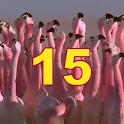 15 puzzle game animals FREE icon