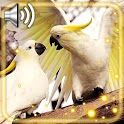 Sounds of Birds icon