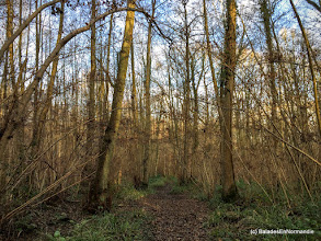 Photo: Bois de la Mare Sangsue