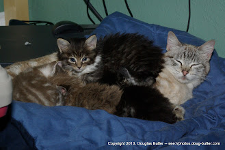 Photo: Sharing a nap at their new foster home in Victoria.