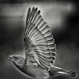 by Ad Spruijt - Black & White Animals