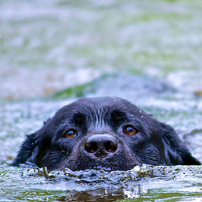 Jackson by Martha Pope - Animals - Dogs Portraits ( playful, joy, cute, swimming, natural background, nature, happy, action, mamal, wet, animal, water, moving, animalia, male, adult, young, portrait, close-up, canine, joyful, animal kingdom, pet, dog, companion dog, natural, #GARYFONGPETS, #SHOWUSYOURPETS )