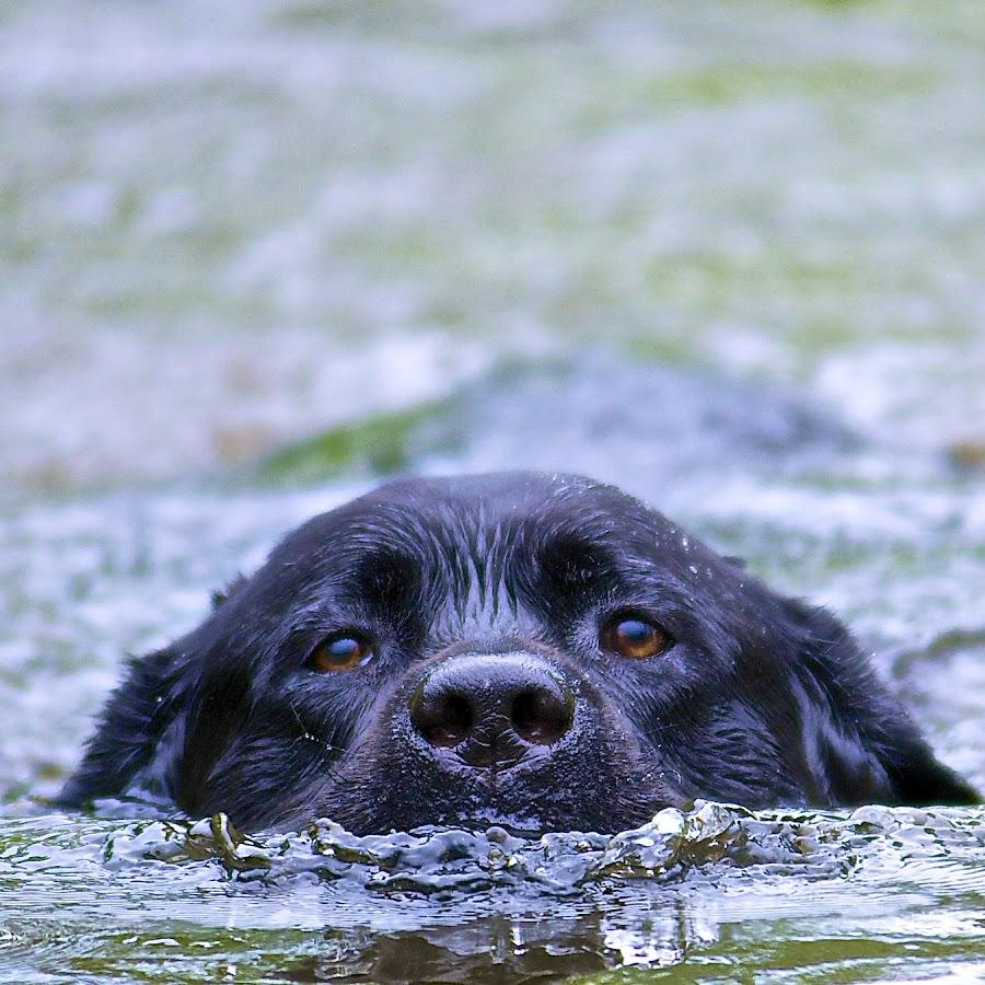 Jackson by Martha Pope - Animals - Dogs Portraits ( playful, joy, cute, swimming, natural background, nature, happy, action, mamal, wet, animal, water, moving, animalia, male, adult, young, portrait, close-up, canine, joyful, animal kingdom, pet, dog, companion dog, natural, #GARYFONGPETS, #SHOWUSYOURPETS )