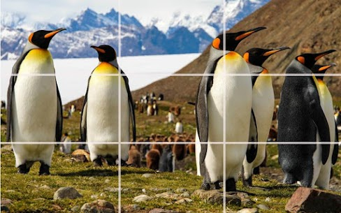 Puzzle – Bears and penguins 6