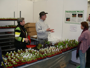 Photo: Special CP-exhibition at the Regio-Messe 2010. At the sales stand with plants from Germany's oldest CP-nursery Thomas Carow. Meanwhile most of the plants are sold ...