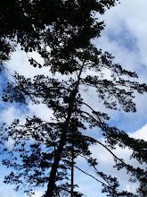 Photo: Student w akcji na drzewie