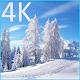 Winter 4K LWP