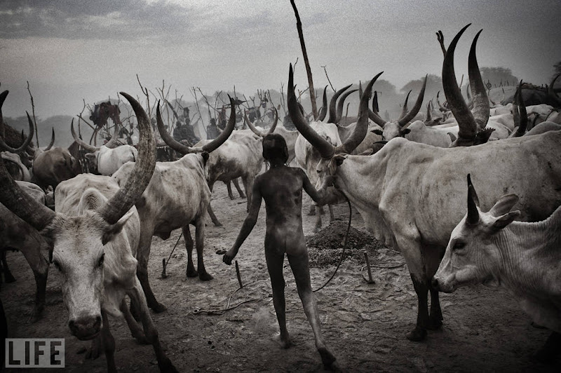 Photo: A Dinka boy walks among cattle in South Sudan, which became the world's newest nation on July 9. South Sudan, one of the world's poorest countries, endured years of violence and war. Photo: Francesco Zizola/NOOR Mar 23, 2011