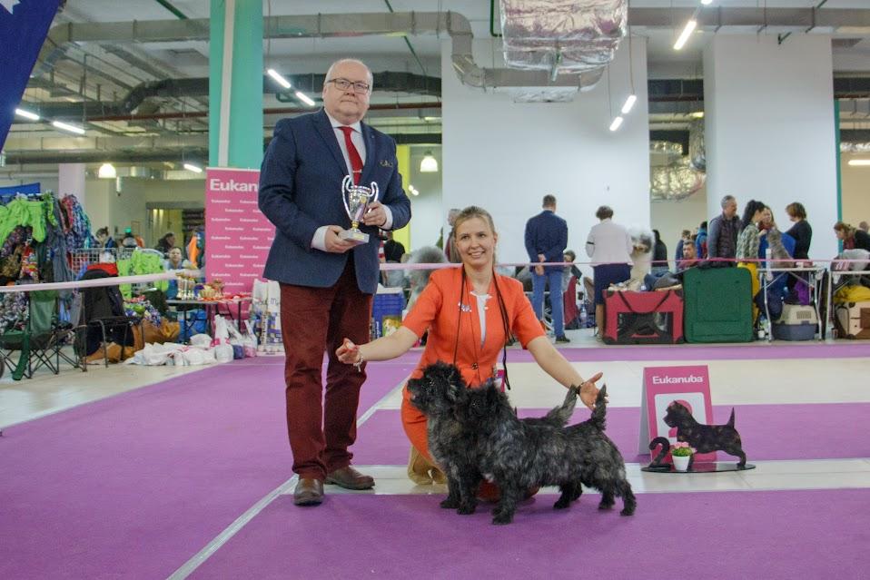 Фото керн терьеров питомника Еливс с хендлером и экспертом на призовом месте выставки
