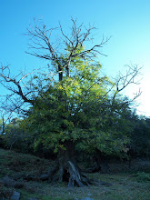 Photo: Can Bosc