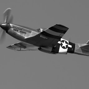 P51D - Mustang by Mike Ellis - Transportation Airplanes