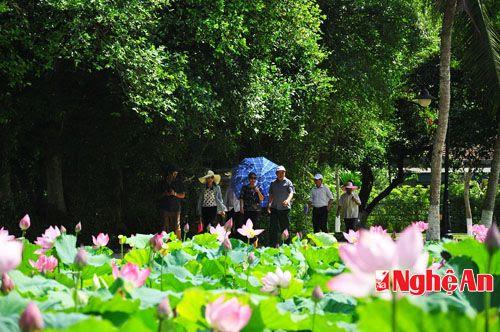 Tháng 5 về thăm làng Sen quê cha, Hoàng Trù quê mẹ